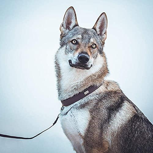 PetTec Hundehalsband aus Trioflex™ mit Polsterung, Braun, Wetterfest, Wasserabweisend, Robust - 6