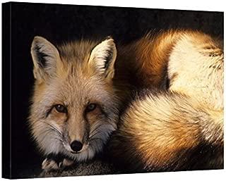 Easy Art Prints Gerry Reynolds's 'Red Fox' Premium Canvas Art 20 X 30