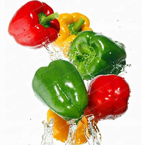 Bloom Green Co. Paprika Bonsai bunter Pfeffer Bonsai Balkon Obst und Gemüse für Hausgarten Bonsai 100 PCS