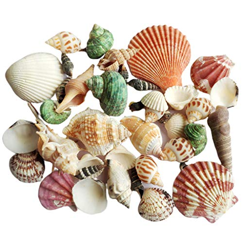 PHILSP Shell 120g natürliche Turbo Muschel Sea Conch Einsiedlerkrebs Haus Aquarium Praktische Shell