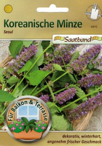 Koreanische Minze Seoul Saatband für Balkon & Terrasse dekorativ winterhart angenehm frischer Geschmack 43915