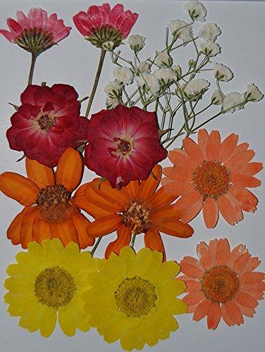 handi-kafu rosso fiore bianco dolce Alyssum con ramo e mini rose margherita giallo e viola reale premuto fiori secchi