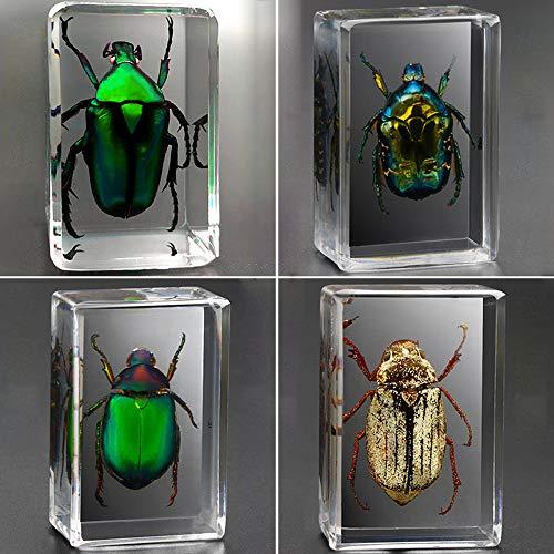 Espécimen de Insecto Observación Juguete Escorpión Escarabajo Araña Resina de Insectos Enseñanza de jardín de Infantes Muestra de Insectos Reales Resina Transparente Creativo Adornos pequeños
