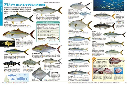 DVD付新版魚(小学館の図鑑NEO)