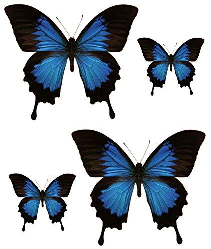 Akachafactory Set 4 x Aufkleber Sticker Auto, Motorrad, Deco Schmetterling blau, schwarz, Kühlschrank