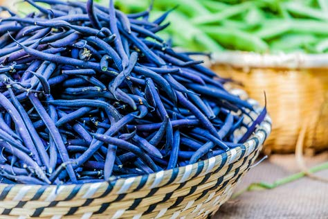 Stangenbohne Blauhilde 10 Samen Bohnen