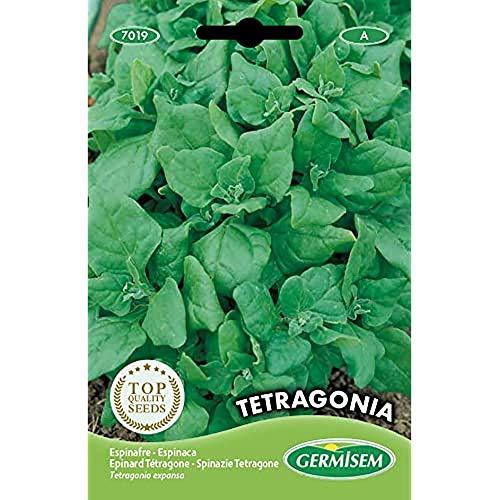Germisem Tetragone Semillas de Espinacas 5 g
