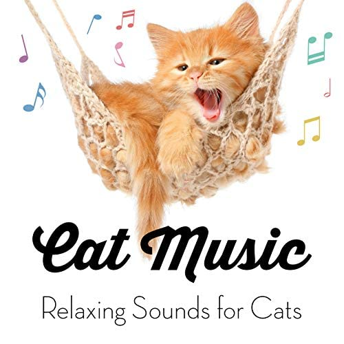 Cat Music, Cat Music Experience & Music For Cats