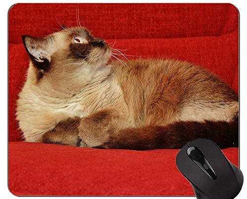 Mauspads und Shorthair Cat Gaming Maus-Pads Kurzfristiger Geschenk-Bedarf?.