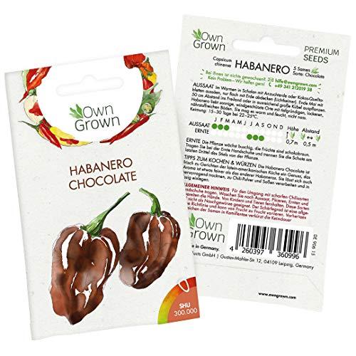 Chilisamen Habanero Chocolate: 5 Premium Habanero Samen zum Anbau von Chili Pflanzen für Balkon und Garten – Habanero Chili Samen für frische Chilipflanzen – Chilli Samen scharf von OwnGrown