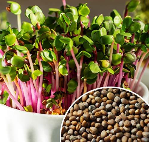 21,49€ (21,49€ pro 1kg) 1000g Bio Keimsprossen Daikon-Rettich Samen für die Sprossenanzucht Sprossen aus Italien | 1 kg | Superfood | Rettich Keimsprossen | kompostierbare Verpackung | STAYUNG