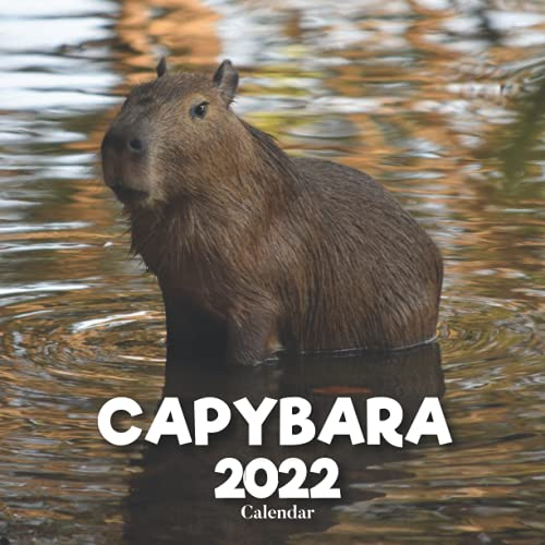 Capybara Calendar 2022: A Monthly and Weekly 12 Months Calendar 2022 With Pictures of the Capybara For Desk, Office to Write in Appointment, Birthday, ... Ideas For Men, Women, Girls, Boys in Bulk