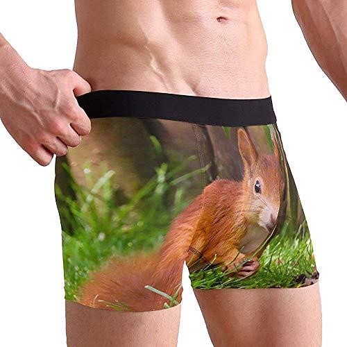 Animal World Squirrel Roedor Búsqueda de Comida (1) Calzoncillos bóxer para Hombre...