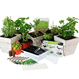 Medicinal & Herbal Tea Indoor Herb Garden Starter Kit | Basic Herb Seeds | 6 Non-GMO Varieties | Seeds: Chamomile, Lavender, Lemon Balm, Calendula, Echinacea, Yarrow