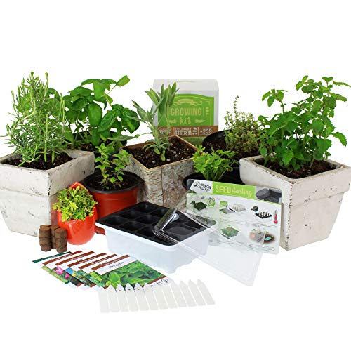 Culinary Indoor Herb Garden Starter Kit | Basic Herb Seeds | 6 Non-GMO Varieties