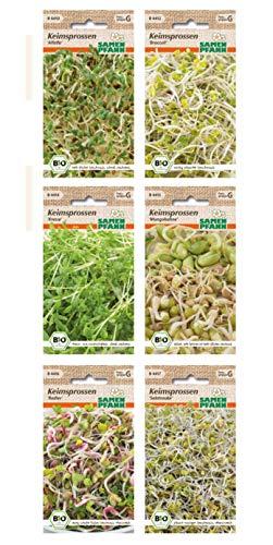 Bio Keimsprossen verschiedene Sorten Alfalfa Radies Broccoli Kresse Mungbohnen Radies (Salatrauke)