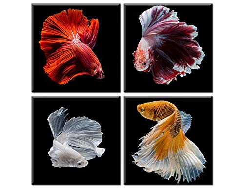 Red Betta Fish Canvas Wall Art Siamese Fighting Fish Betta Splendens on Black Background Painting House Decor for Living Room Contemporary Artwork 4 Panel Wooden Framed Ready to Hang(12''Wx12''Hx4)