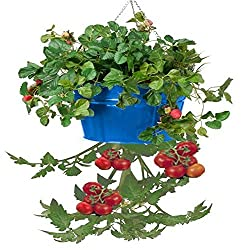 HIT Corp. 8399E B Enameled Galvanized Steel Hanging Planter, Blue