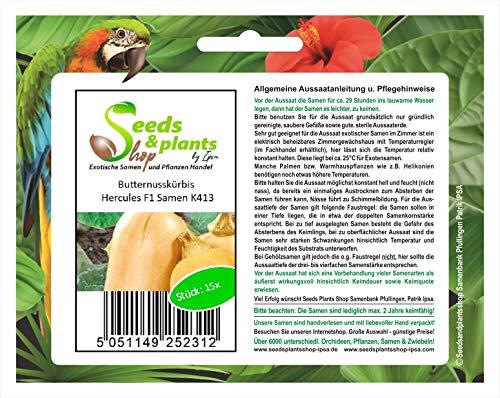Stk - 15x Butternusskürbis Hercules F1 - Kürbis Samen Gemüse Garten Pflanze K413 - Seeds Plants Shop Samenbank Pfullingen Patrik Ipsa