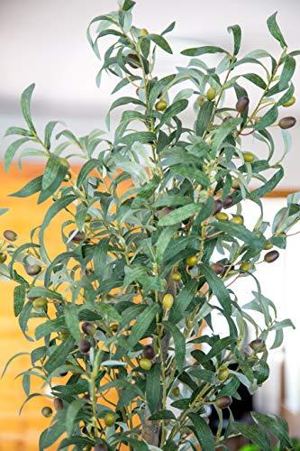 Maia Shop Olivo Troncos Naturales, Elaborados con los Mejores Materiales, Ideal para Decoración de hogar, Árbol, Planta Artificial (150 cm), Mixtos