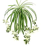 Zivisk Artificial Flowers Spider Plant Fake Greenery - Indoor Outside Home Garden Office Verandah Wedding Decoration - 2PCS