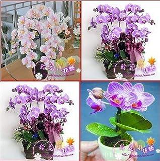 Venta al por mayor 120pcs / lot 24 tipos diferentes de orquídeas multicolores mariposa semillas de flor de semillas Phalae...