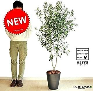 LAND PLANTS オリーブ 10号サイズ 黒セラーアート鉢