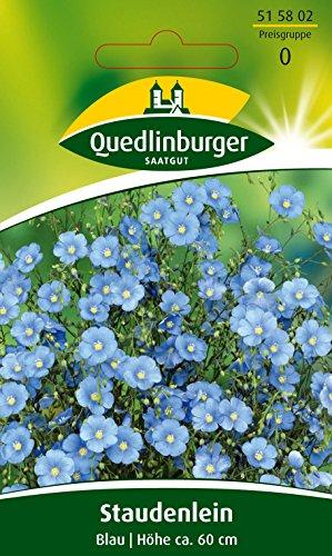 Lein, Blau, Linum perenne, ca. 50 Samen