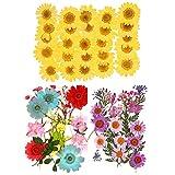 65 Piezas Flores Secas Naturales, Flor Prensada Mezclada para Joyería de Resina DIY Bricolaje Decoraciones Florales para Uñas Colección Regalo Scrapbooking Arte Manualidades