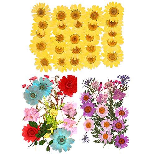 Flores Secas Manualidades Resina flores secas  Marca cailiya