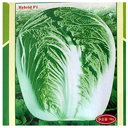Automne King Chou Shandong Jiaozhou Graines de chou chinois améliorées 10g Graines de légumes d'automne 300g
