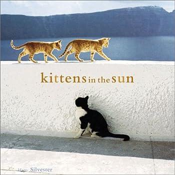 Kittens in the Sun