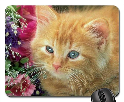 Sweet Kitten Mouse Pad, souris (Cats Mouse Pad)
