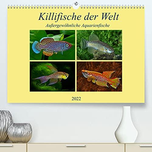 Killifische der WeltCH-Version (Premium, hochwertiger DIN A2 Wandkalender 2022, Kunstdruck in Hochglanz): Farbenprächtige, außergewöhnliche ... (Monatskalender, 14 Seiten ) (CALVENDO Tiere)
