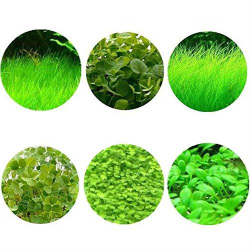 good01 600 Stücke Aquarium Gras Pflanzen Samen, Aquarium Wasser Gras Pflanzen Samen Aquarium Landschaft Decor Wasser Grassamen 600 Stück