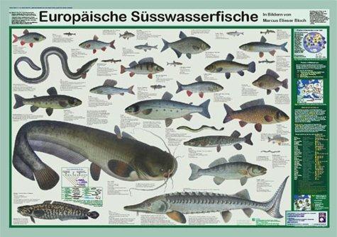Europäische Süsswasserfische (Planet-Poster-Box)