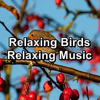 Relaxing Birds Relaxing Music