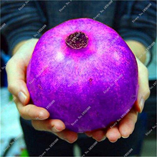 Grenade rare géant Graine Japon Bonsai savoureux fruits bio Heirloom non Ogm Multi Color Fruit Graine Arbre à feuilles persistantes 30 Pcs/Lot 1
