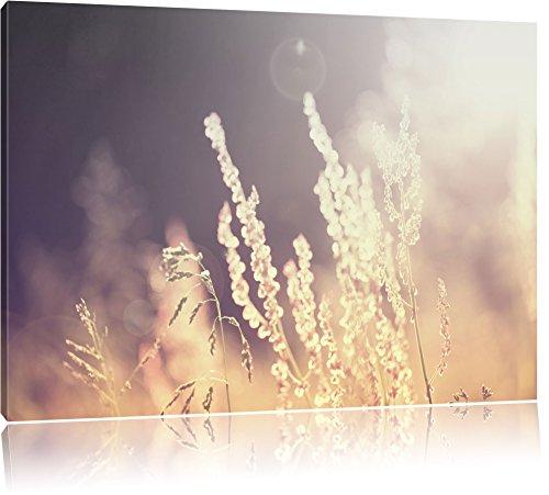 Pixxprint Gräser bei abendlicher Dämmerung/Format: 60x40cm / Leinwandbild fertig bespannt Wandbild Kunstdruck