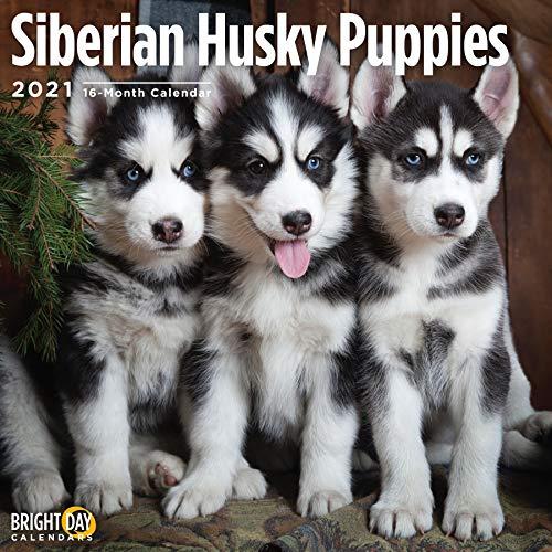Bright Day 2021 Wandkalender mit sibirischen Husky-Welpen, 30,5 x 30,5 cm, süßer Hund