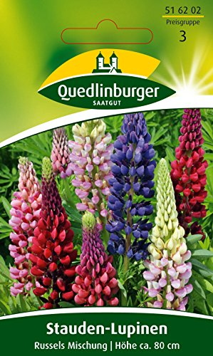 Quedlinburger Lupine \'Russels Mix\', 1 Tüte Samen