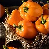 100pcs Semillas De Pimiento Verduras Verdes Fácil De Cultivar Jardinería Plantación Excelente Elección Variedad De Nivel De Entrada Por Los Jardineros Favoritos