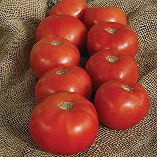 Best green sausage tomato plants Reviews