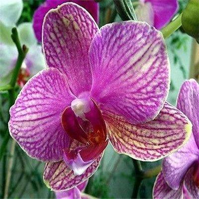 `` `10pcs Hot / pack Diffenent mixte orchidée papillon Bonsai graines de fleurs d'orchidées POT DE FLEUR PLANT GARDEN DIY ACCUEIL