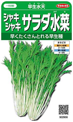サカタのタネ 実咲野菜2930 シャキシャキサラダ水菜 早生水天 00922930