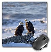 3drose LLC 8x 8x 0.25インチマウスパッド、David Northcott (MP 84015_ 1)