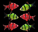 GloFish Live Fish Collections (Barb Complete)