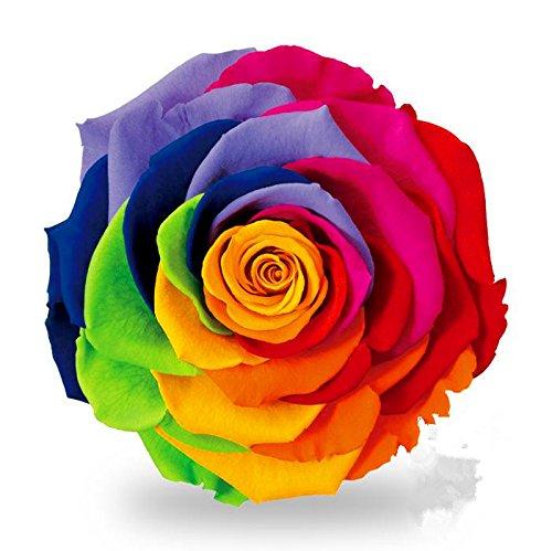 salon géant mixte rose semences 50 / paquet, quatre saisons de semis des graines de fleurs vivaces