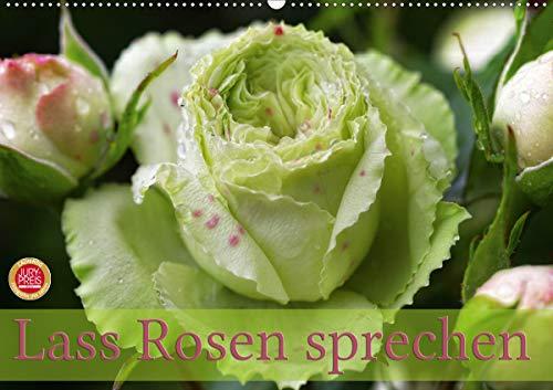 Lass Rosen sprechen (Wandkalender 2021 DIN A2 quer)