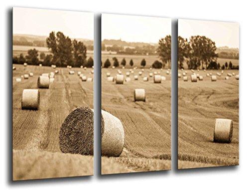 Cuadro Fotográfico Paisaje Cultivo Rural Tamaño total: 97 x 62 cm XXL